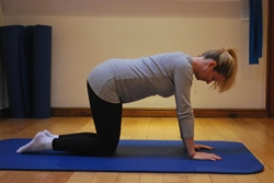 Pregnant woman doing abdominal exercise on hands and knees - ending position